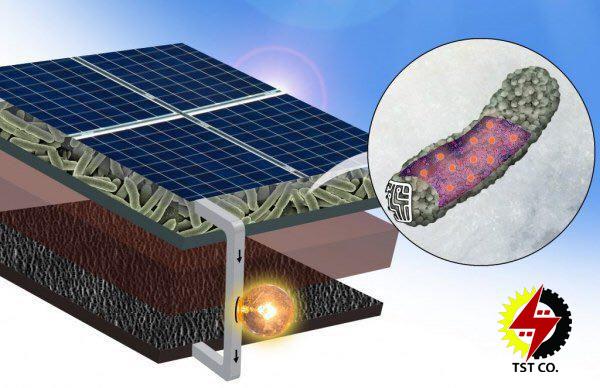 تولید انرژی از نور خورشید به کمک سلول های خورشیدی ساخته شده از باکتری ها