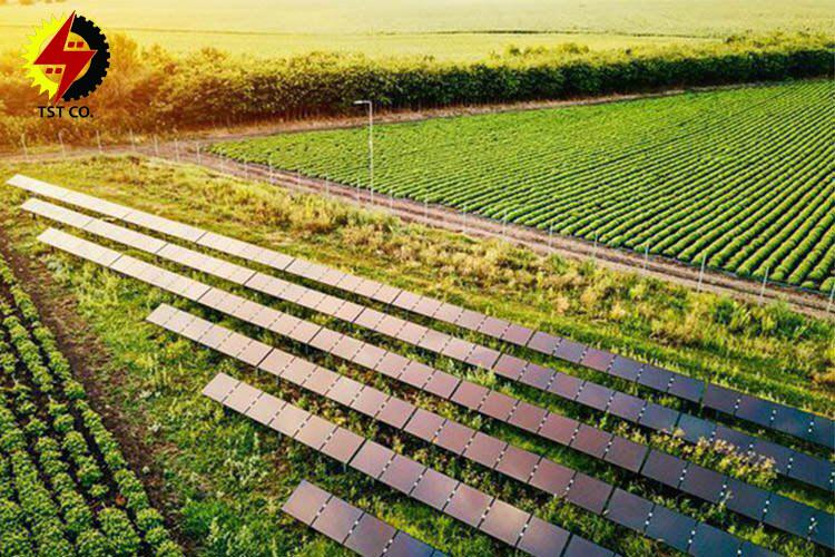 تولید انرژی و غذا در مزارع خورشیدی